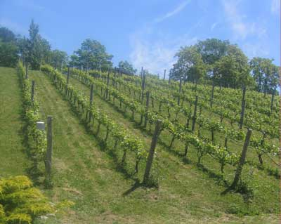 Tawse Vineyard
